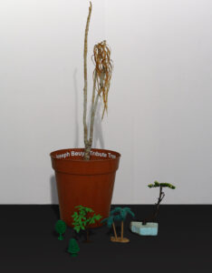 Beuys Forest Infected with The Gertz Virus // Plant Pot, Soil, Yucca, Plastic Trees // 60 x 40 x 60 cm // 2005