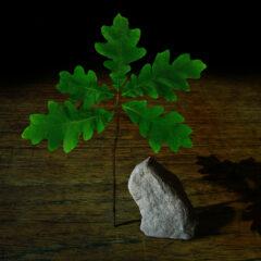Tree Stand Stone // Digital Image // 2016