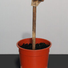 Termination Seeds the Endless Revolution // Wood, Plant Pot, Soil, Glue, Bone Joint // 45 x 20 x 20 cm // 2005